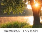 misty dawn at the lake | Shutterstock . vector #177741584