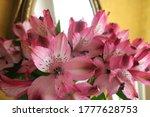 Bouquet Of Pink Alstroemeria ...