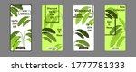 fresh leaves story banner...   Shutterstock .eps vector #1777781333