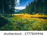 Mountain forest meadow landscape. Meadow in mountain forest