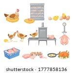 hen eggs incubator and dressed...   Shutterstock .eps vector #1777858136