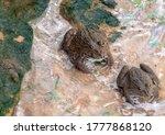 Frogs On Floor Head Frogs On...
