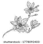 magnolia flowers drawing with... | Shutterstock .eps vector #1778092403