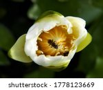 The Bees Stick To The Pollen Of ...