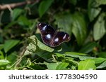 Butterfly Basking In The...