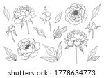 contoured simple peony flowers  ... | Shutterstock .eps vector #1778634773