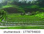 Photo Of Greenish Rice Fields...