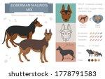 Designer Dogs  Crossbreed ...