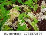 Perfect Natural Fern Pattern....