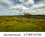 landscape from swamp, sunny summer day with bog vegetation, trees, mosses and ponds, cloudy sky, Nigula bog, Estonia