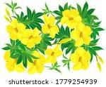 Yellow Alamanda Flower Isolated ...