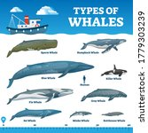 Types Of Whales Educational...