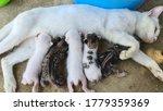 Kittens Drinking Milk From...