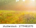 Lush Green Foliage Of Trees An...