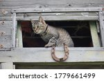 A Tabby Cat Sits On The Window...