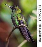 beautiful and exotic green bird ... | Shutterstock . vector #177972143