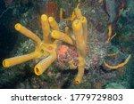 Yellow Sponge Or Yellow Tube...