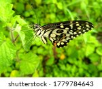 Butterfly On The Green Grass...