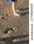 Childes feet on the wet seashore close-up. Footprints on the wet shore. A seashore made of small shells. Evening sunlight. Walk along the seashore.