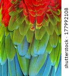 close up of red  green and blue ... | Shutterstock . vector #177992108