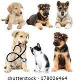 Stock photo puppy looks set 178026464