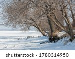 Winter Bare Trees At The Frozen ...