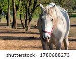 White horse looking at camera....