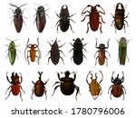 Set Of Beetles  Coleoptera ...