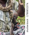 Small photo of King Cobra Snake. Snake charmer mystical indian fakir Close-up of man