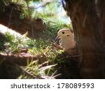 A Cute Mourning Dove In A Nest...