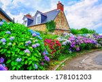 colorful hydrangeas flowers in... | Shutterstock . vector #178101203