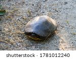 View Of A Turtle At The...
