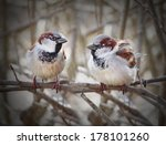The Pair Of A House Sparrow ...