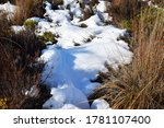 Snow Covers Tussock Grasses On...