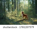 Dog In Forest On A Log . Red...
