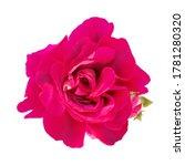 single beautiful realistic...   Shutterstock .eps vector #1781280320