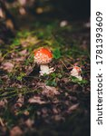 Red Amanita Mushroom In The...