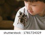 Tarantula Spider Stretches Paw...