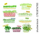 set of microgreens icons... | Shutterstock .eps vector #1781876783