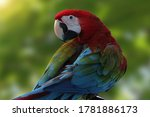 Beautiful Bird Macaw Parrot Is...