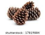 pine cones | Shutterstock . vector #17819884