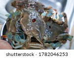Prepared Blue Crabs From...