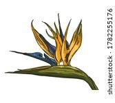 strelitzia tropical flower....   Shutterstock .eps vector #1782255176