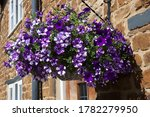 A Hanging Basket With Large...