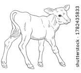 Hand Drawn Vector Of Calf...