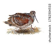 Woodcock Watercolor Painting...