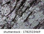 Mossy Bark Texture Closeup....