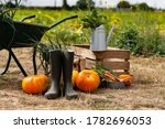 Autumn  Harvest Time....