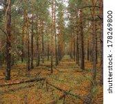autumn pine forest | Shutterstock . vector #178269800