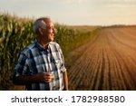 Senior Farmer Standing In Corn...